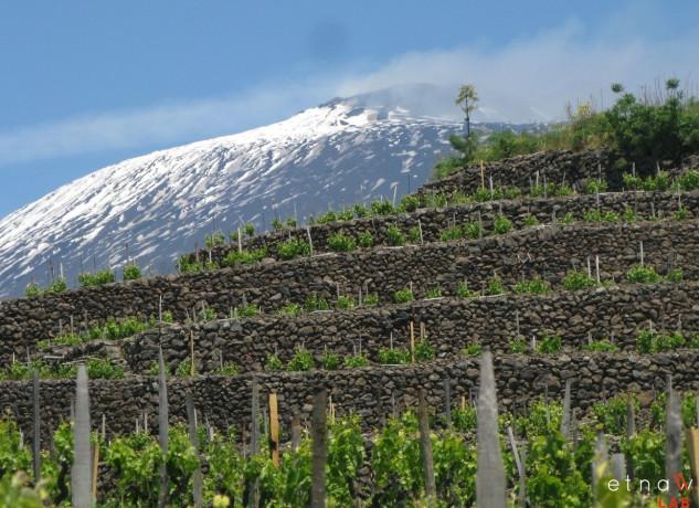 etna-wine-lab-firma-foto-20.jpg