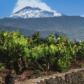 cover_viticoltura_etna-eolie.jpg