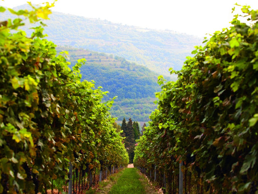 Tenuta Chiccheri: Hidden Treasure in Valpolicella