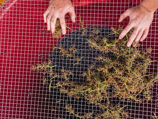 Tenuta L'Armonia: is it Time for a Wine Revolution?