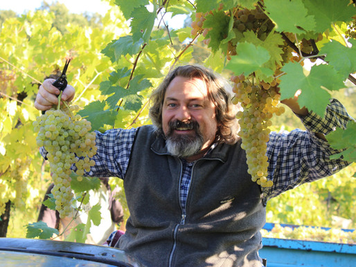 Filippi: Woods and Vineyards
