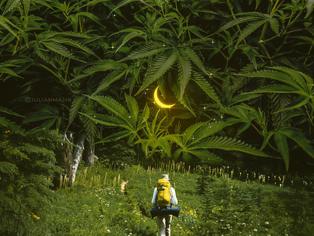How Cannabis changed Health & Wellness