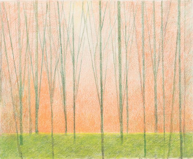 Untitled - trees with orange sky