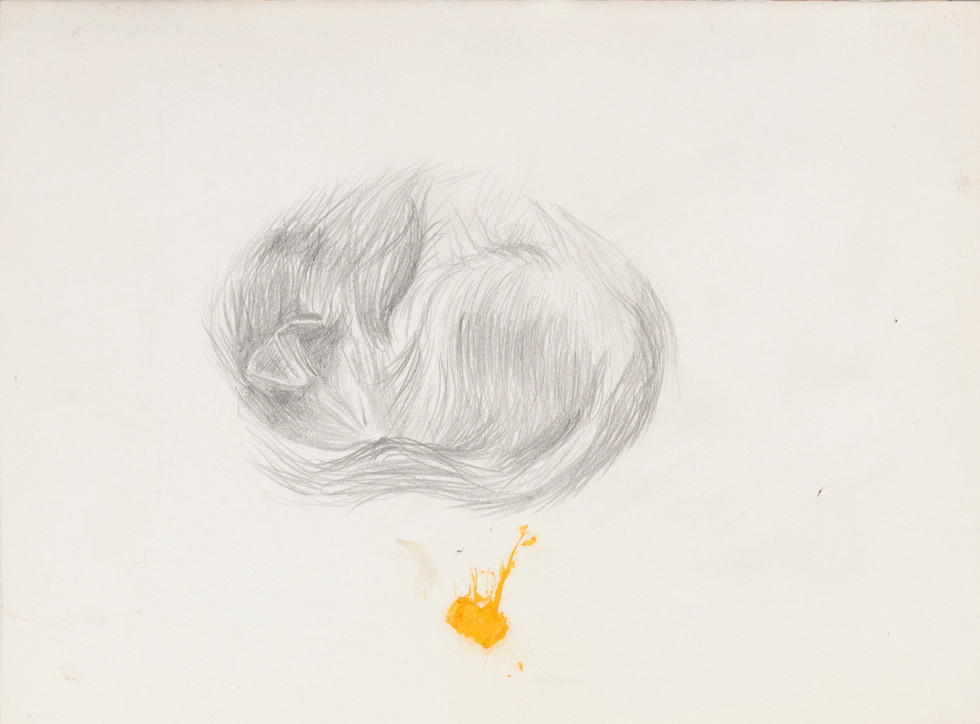 Untitled sketch - curled up cat asleep