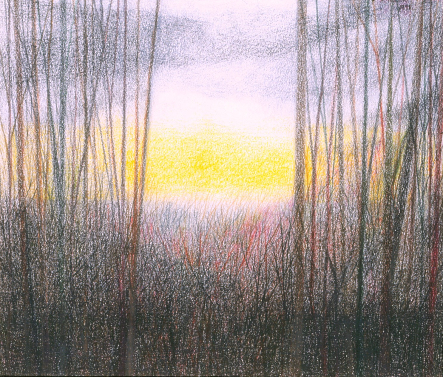 Untitled - trees and shrubs