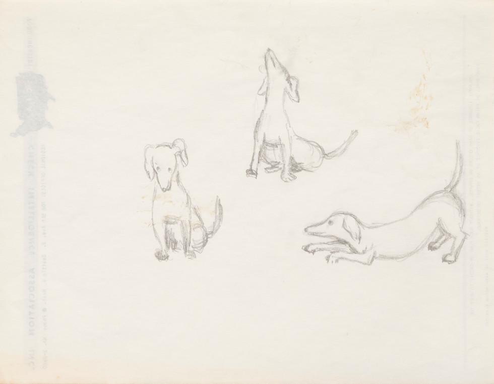 Untitled sketch - sketch for boy and dog illustration, studies of the dog (2)