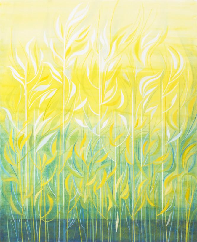 Ripening Grasses (2)