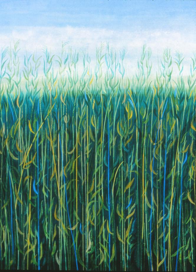 Ripening Grasses (1)
