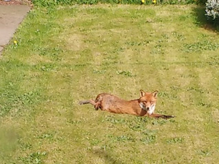 Our Friend The Fox Garden