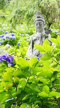 紫陽花と観音