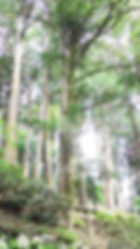 三峯神社・縁結びの木