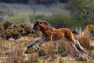 Foal 1 IMG_3474.jpg