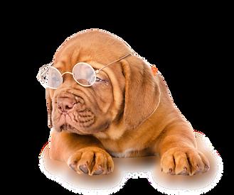 0.25MP cute dog AI.png