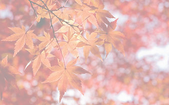 Maple%20Leaf%20Background_edited.jpg