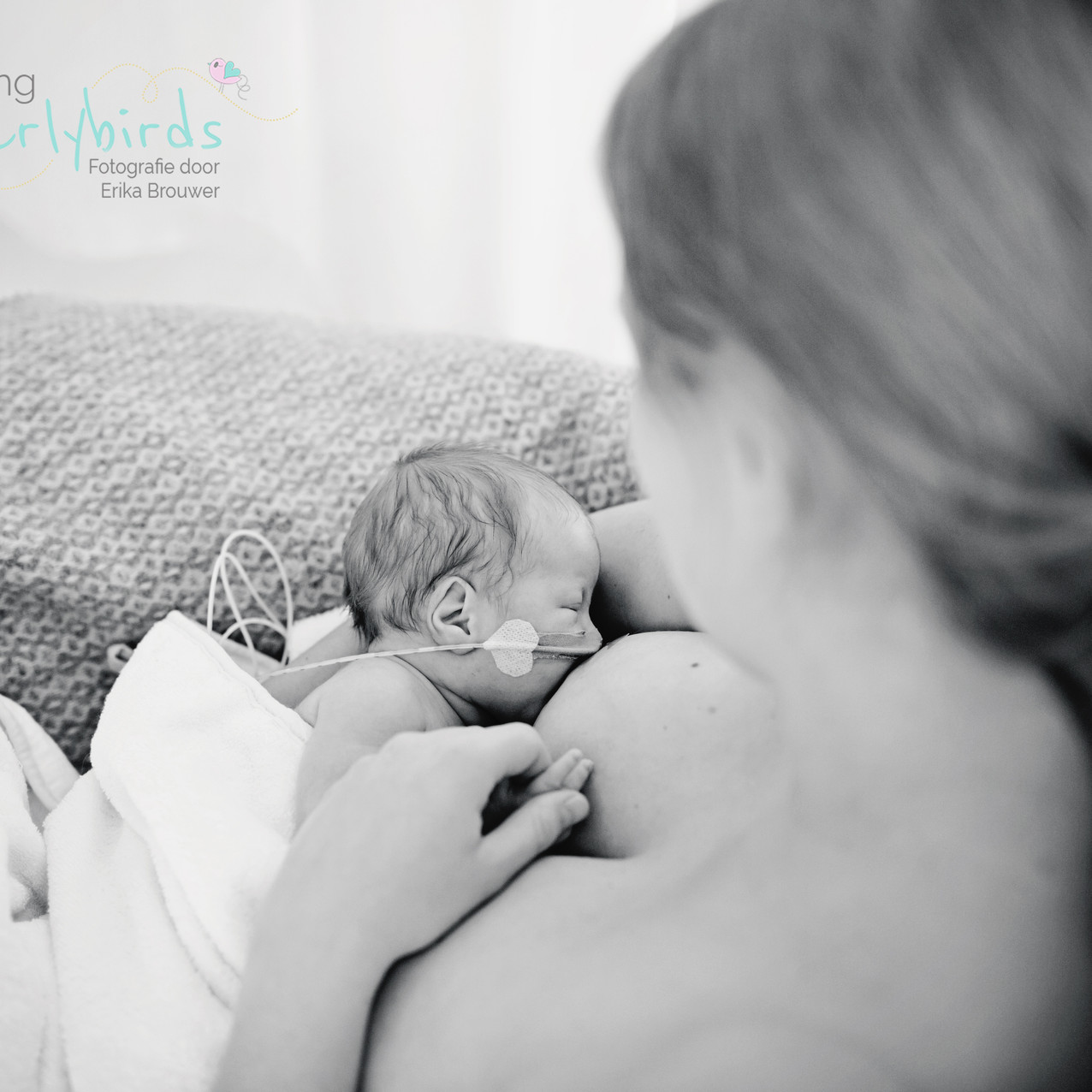 Earlybirds newborn