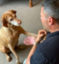 Dog Physiotherapy.JPG, Dog physio, stretches, range of motion, vet physio