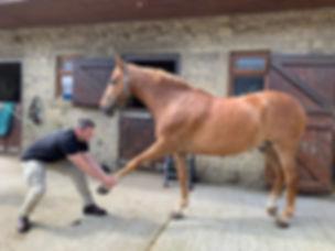 Paul Hodgkinson Vet Physio Horse protrac
