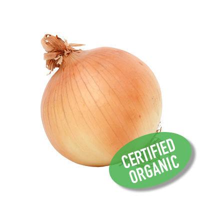 Yellow Onion - Organic 洋蔥 (400g)