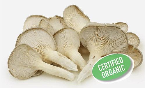 Mushroom - Oyster 秀珍菇 (200g)