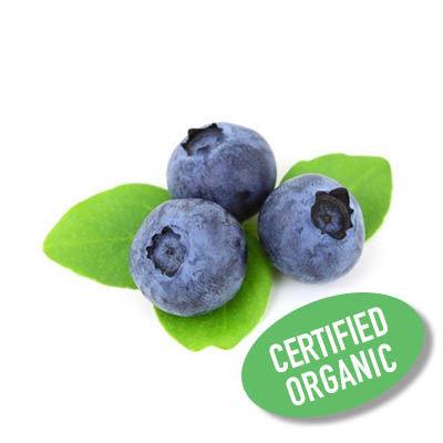 Blueberry - Organic 藍莓 (125g)