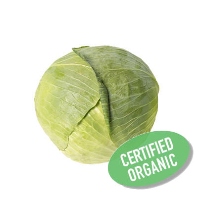 White Cabbage - Organic 白椰菜 (800g)