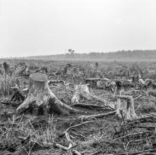 deforest_forweb (5 of 25).jpg