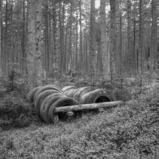 deforest_forweb.3 (1 of 4).jpg