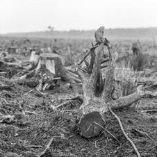 deforest_forweb (6 of 25).jpg