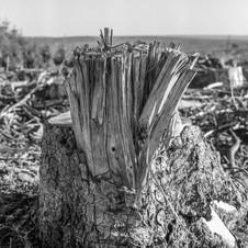 deforest_forweb (9 of 25).jpg