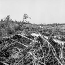 deforest_forweb (24 of 25).jpg