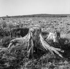 deforest_forweb (21 of 25).jpg