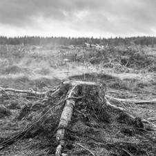 deforest_forweb.2 (1 of 10).jpg