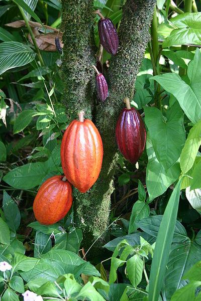 chocolate_cocoa_chocolate_terrace_chocolate_fountain