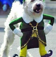 Irish, non-Irish, want to be Irish!