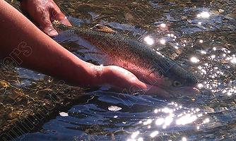 kamchatka rainbow trout fishing.jpg