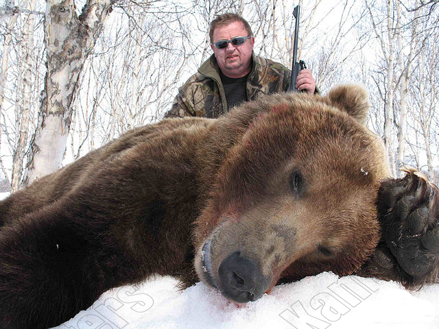 Kamchatka brown bear trophy