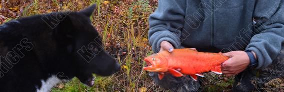 Kamchatka Arctic char fishing