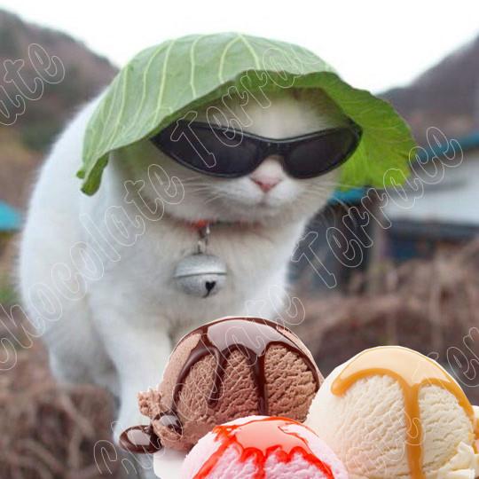 Ice-cream-cat-in-New-York