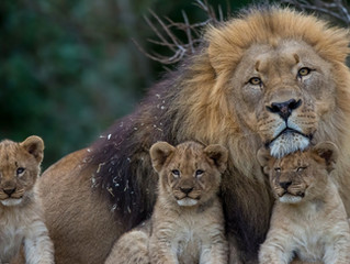Happy Fathers Day! Be brave!