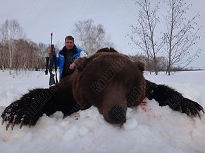 Kamchatka brown bear trophy hunt.jpg