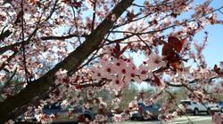 w_spring_chocolate_fountain_new_york