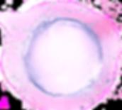 pngguru_edited_edited_edited.png