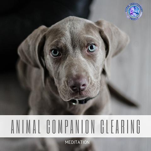 Animal Companion Clearing MP3