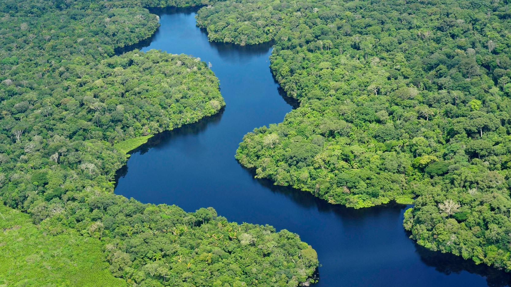 BRAZIL - AMAZON JUNGLE
