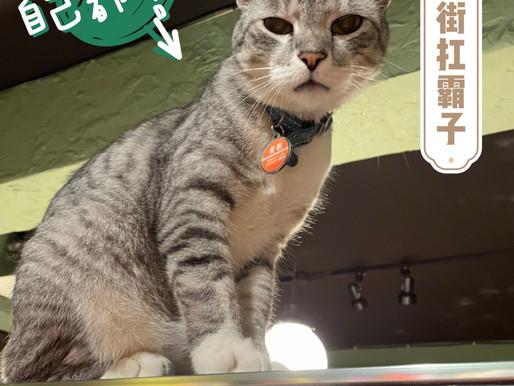 台北東門站‧鴉埠咖啡.Yaboo Café|貓咪咖啡廳|永康商圈深夜文青貓咖啡|喵店長虎面是永康街陽光扛霸子。