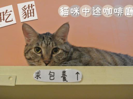 捷運輔大站‧吃。貓|貓咪中途咖啡廳|浪浪店員超撒嬌|可帶外食,歡迎帶認真又敬責的貓店員回家。
