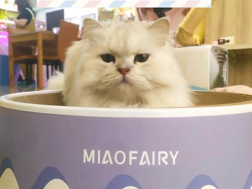 新北三重‧咪可思啾芭|貓中途咖啡廳|吸貓放空超舒適療癒,找到心愛的毛孩的最佳場所