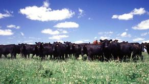 Convocatoria del IPCVA a investigadores: sustentabilidad de la cadena de ganados y carne vacuna.