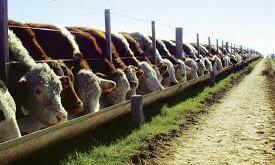 Feedlots: la incertidumbre condiciona al negocio del engorde a corral