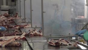 Efectos negativos del cierre parcial a las exportaciones de carne